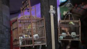 Eingesperrter Vogel, der herum im h?lzernen K?fig f?r Verkauf auf Stra?e flattert stock video footage