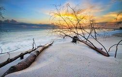 Eingestürzte Bäume am Strand Lizenzfreies Stockfoto