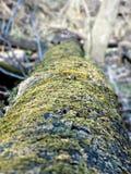 Eingestürzter Baum bedeckt im Moos Stockfoto