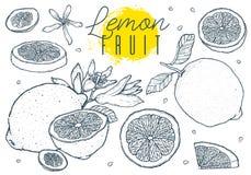 Eingestellte Hand gezeichnete Skizze der Frucht Zitronen Abbildung der roten Lilie Auch im corel abgehobenen Betrag Schwarze Lini Lizenzfreies Stockbild