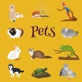 Eingestellten die Haupthaustiere, Katzenhundepapageien-Goldfischhamster, domestizierten Tiere Stockfoto