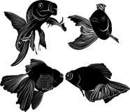 Eingestellter schwarzer Schattenbildgoldfisch lokalisiert auf weißem Hintergrund lizenzfreies stockfoto