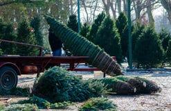 Eingewickelte Weihnachtsbäume Stockfoto