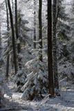 Eingewickelter Blizzard der Bäume Schnee nachher Stockbild