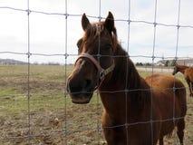 Eingezäunte Pferde Lizenzfreie Stockfotografie