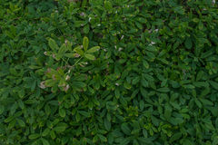 Eingezäunte Vegetation auf dem Florida Coast2 stockbilder