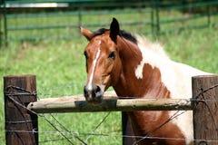 Eingezäuntes Pferd Stockbilder