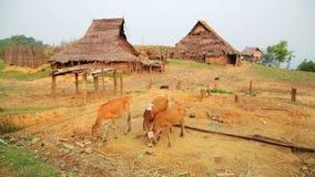 einheimische gebürtige Stammes- Kultur des Akha-Stammdorfs, Pongsali, Laos