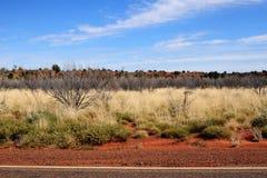 Einheimische Pflanzen in Alice Spring lizenzfreie stockfotos