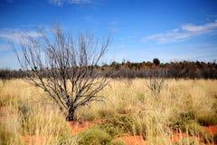 Einheimische Pflanzen am roten Felsen von Alice Spring lizenzfreies stockfoto