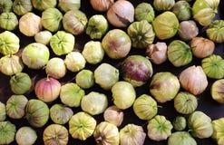 Einheimischer organischer Tomatillos-Physalis, essfertig Wachsen in einem Gemüsegarten Die Voraussetzungen einer großen Salsa Stockfoto