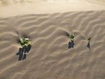 Einige Anlagen wachsen in der Wüste lizenzfreie stockfotos