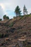 Einige Bäume in den scotish Hochländern Stockfoto