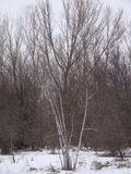 Einige Bäume an einem schneebedeckten Tag Lizenzfreie Stockfotos