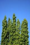 Einige Bäume lokalisiert auf klarem blauem Himmel Lizenzfreies Stockbild