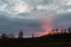 Einige Baumschattenbilder unter einem bewölkten Himmel, mit intensivem Rot Lizenzfreie Stockfotos