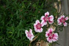 Einige Blumen stockfotografie