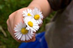 Einige Blumen Lizenzfreies Stockfoto