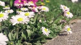 Einige Blumen in einem Garten stock video footage