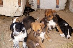 Einige bunte Welpen draußen Kleine Hunde mit traurigen Augen Lizenzfreies Stockbild