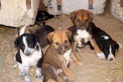 Einige bunte Welpen draußen Kleine Hunde mit traurigen Augen Stockfotografie