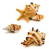 Einige Cockleshells und Starfish Stockfotografie