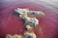 Einige der Gefahren mit Salzkruste, seiend in der rosa Wasserfarbe Las-Salinen, Torrevieja, Spanien Stockfotografie