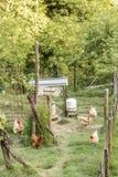 Einige der Hühner im Stift lizenzfreies stockbild