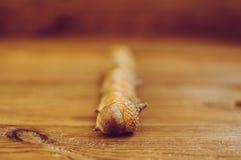 Einige Eicheln auf dem Holztisch stockfotografie