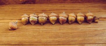 Einige Eicheln auf dem Holztisch lizenzfreies stockfoto