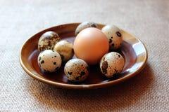 Einige Eier der Wachteln und der der Henne Stockfotos