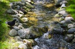 Einige Ereignisse auf dem Ufer von Fluss Lizenzfreie Stockbilder