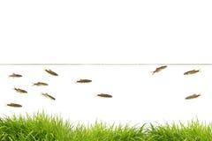 Einige Fische Lizenzfreie Stockfotografie