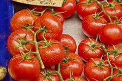 Einige frische rote Tomaten Lizenzfreie Stockbilder