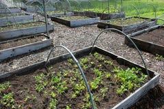 Einige Gartenarbeitbetten gemacht vom Holz, gefüllt mit Vielzahl von Obst und Gemüse von lizenzfreie stockfotos
