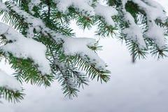 Einige grüne Tannenbaumaste im weißen Schnee Lizenzfreies Stockfoto