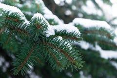Einige grüne Tannenbaumaste im weißen Schnee Lizenzfreie Stockfotos