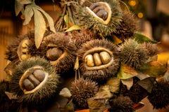 Einige Kastanien in ihrem Igelen und in Blättern lizenzfreie stockfotos