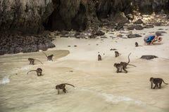 Einige kleine Affen auf Strand in Thailand Stockfotografie