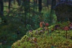 Einige kleine Pilze stockfotografie