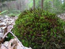 Einige nette Anlagen im Wald stockbild