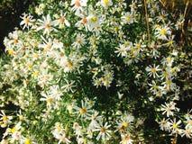 Einige nette weiße Blumen Stockfotos