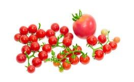 Einige Niederlassungen der Kirschtomate und einer herkömmlichen Tomate Stockbild