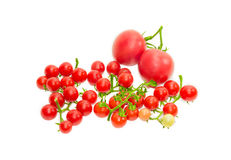 Einige Niederlassungen der Kirschtomate und zwei herkömmlicher Tomaten Lizenzfreie Stockfotos