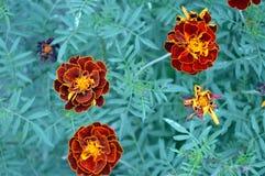 Einige Orangen-Blumen stockbild