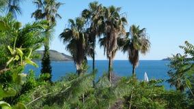Einige Palmen gegen das blaue Meer stock video