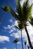 Einige Palmen im Sonnenschein Lizenzfreie Stockbilder