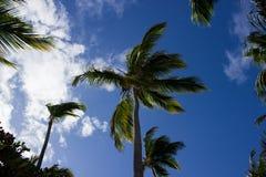 Einige Palmen im Sonnenschein Stockbild