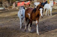 Einige Pferde auf einem Bauernhof lizenzfreie stockbilder