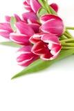 Einige rosafarbene Tulpen Stockfotografie